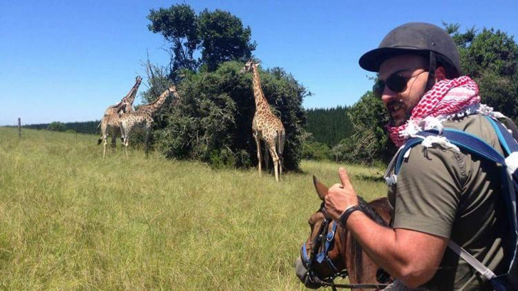 GL Giraffes